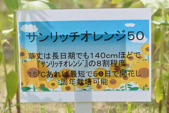 DSC_9681.JPG