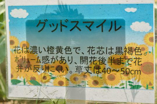 DSC_9807.JPG